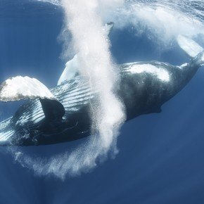 Whale song can reveal secrets deep under the oceans