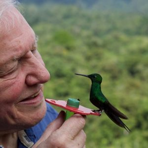 Flame distribution on the documentary Life in Color with David Attenborough