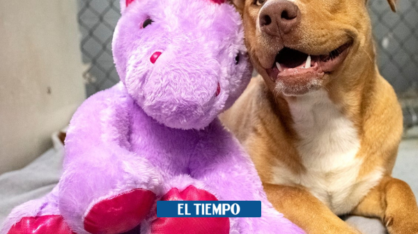 United States: A dog stole stuffed animals 5 times until it was bought – people – culture