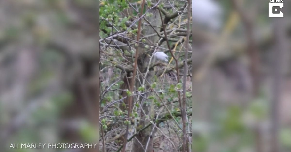 Disconnect.  – Incredibly rare white robin spotted in the UK
