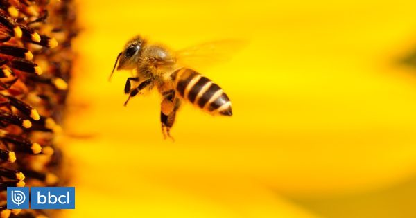 Canada Restricts Pesticides To Care Of Aquatic Insects, But Leaves Bees Out |  Special