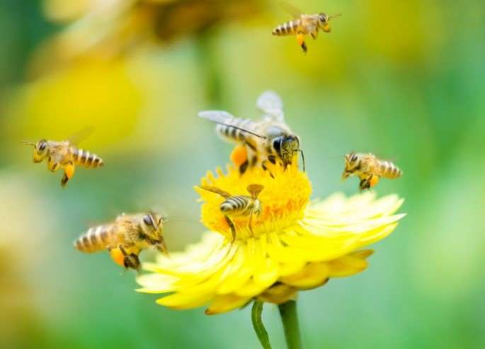 Canada halts total ban on pesticides that kill bees