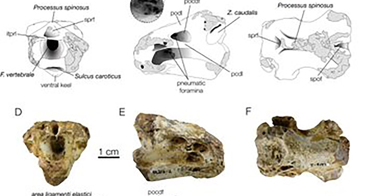 12 years ago, they found a passage from the age of dinosaurs in the Pyrenees: now, the final studies surprised the experts