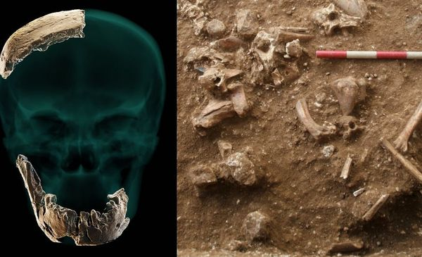A revolution in the scientific world due to the discovery of the remains of a new species of prehistoric man