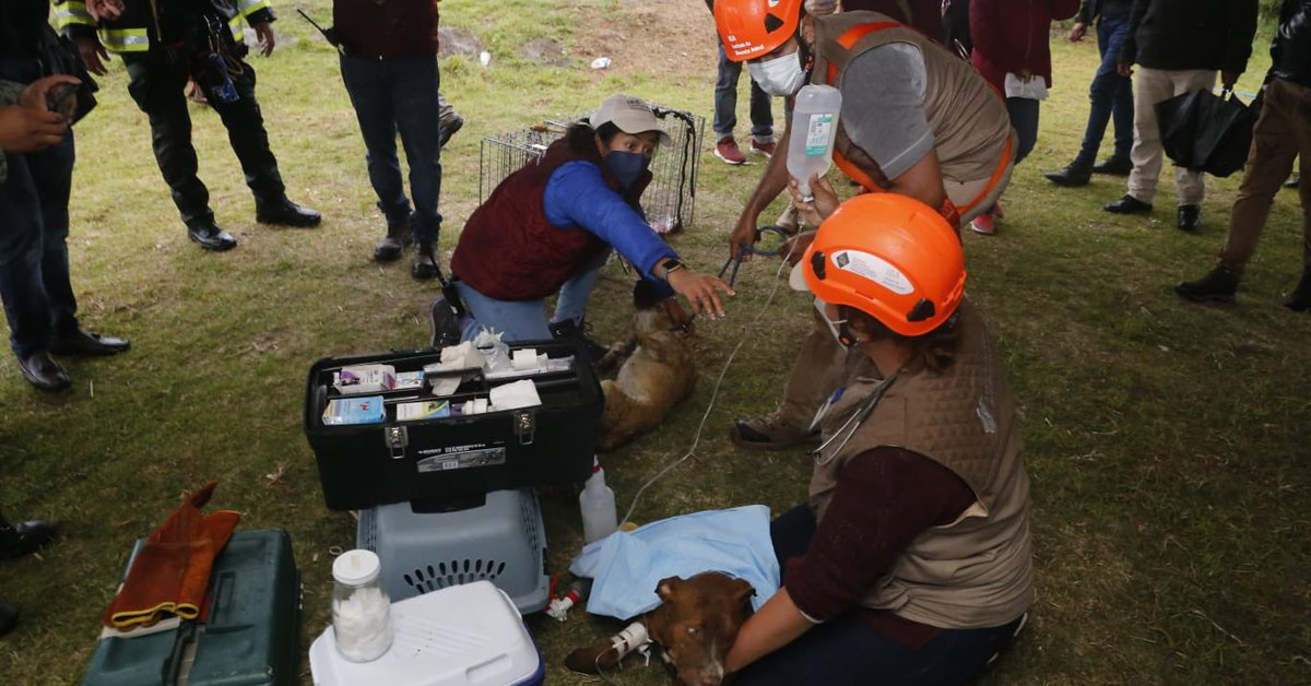 Spy and Spike, the dogs who fell into the Puebla pit, are rescued