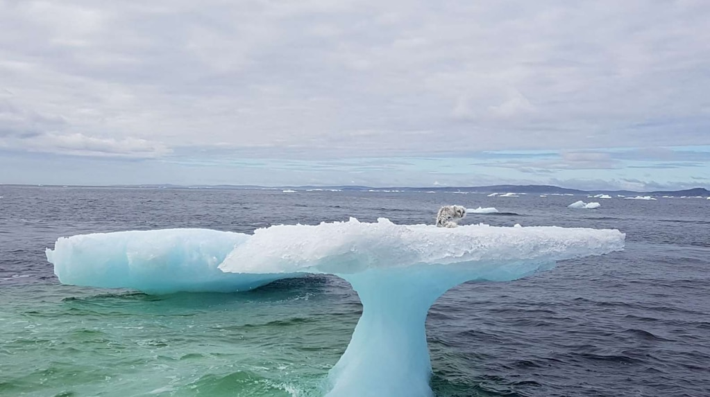 They were looking for crabs, they thought they saw a seal but made an unexpected discovery in an iceberg