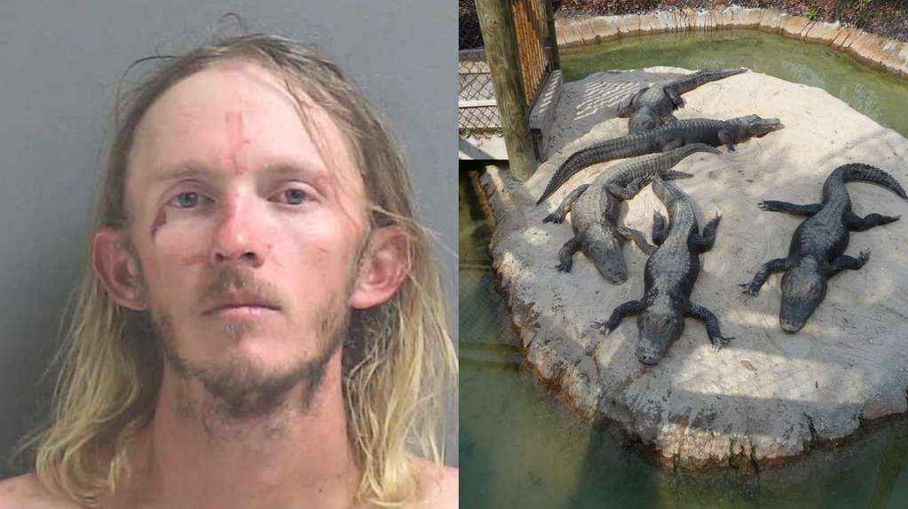 A man stole an alligator from a Florida golf course and wanted to throw it on a roof to 'teach him a lesson'