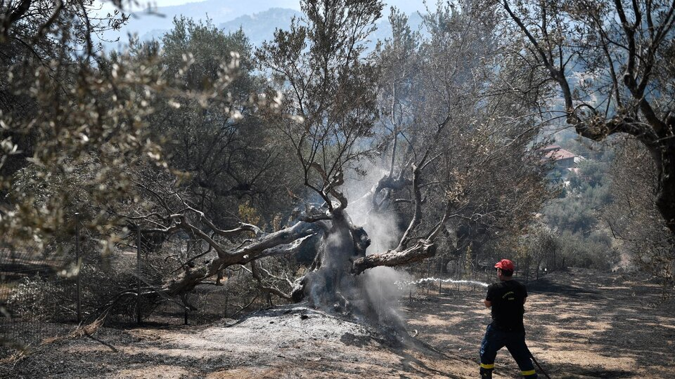 Heat wave in Europe: fires in Greece, Turkey, Italy and Spain |  In some towns they evacuated all residents