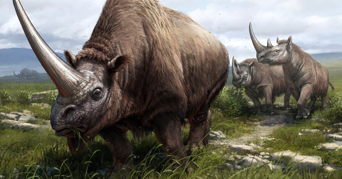 Science – Geneticists trace the rhino family tree