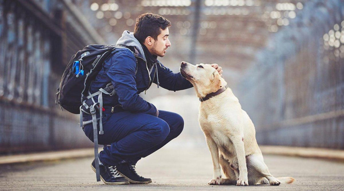 It is said that dogs have developed very similar behavior to humans, even in nonverbal language.