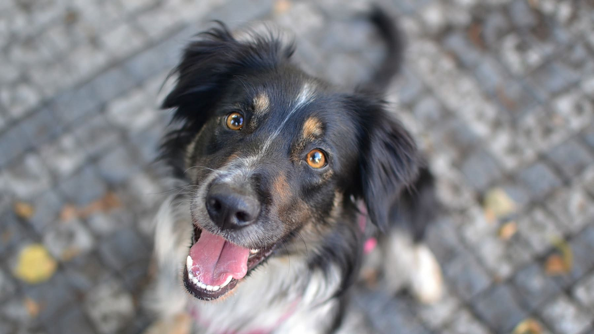 Science Explains Why Dogs Are Loyal Animals