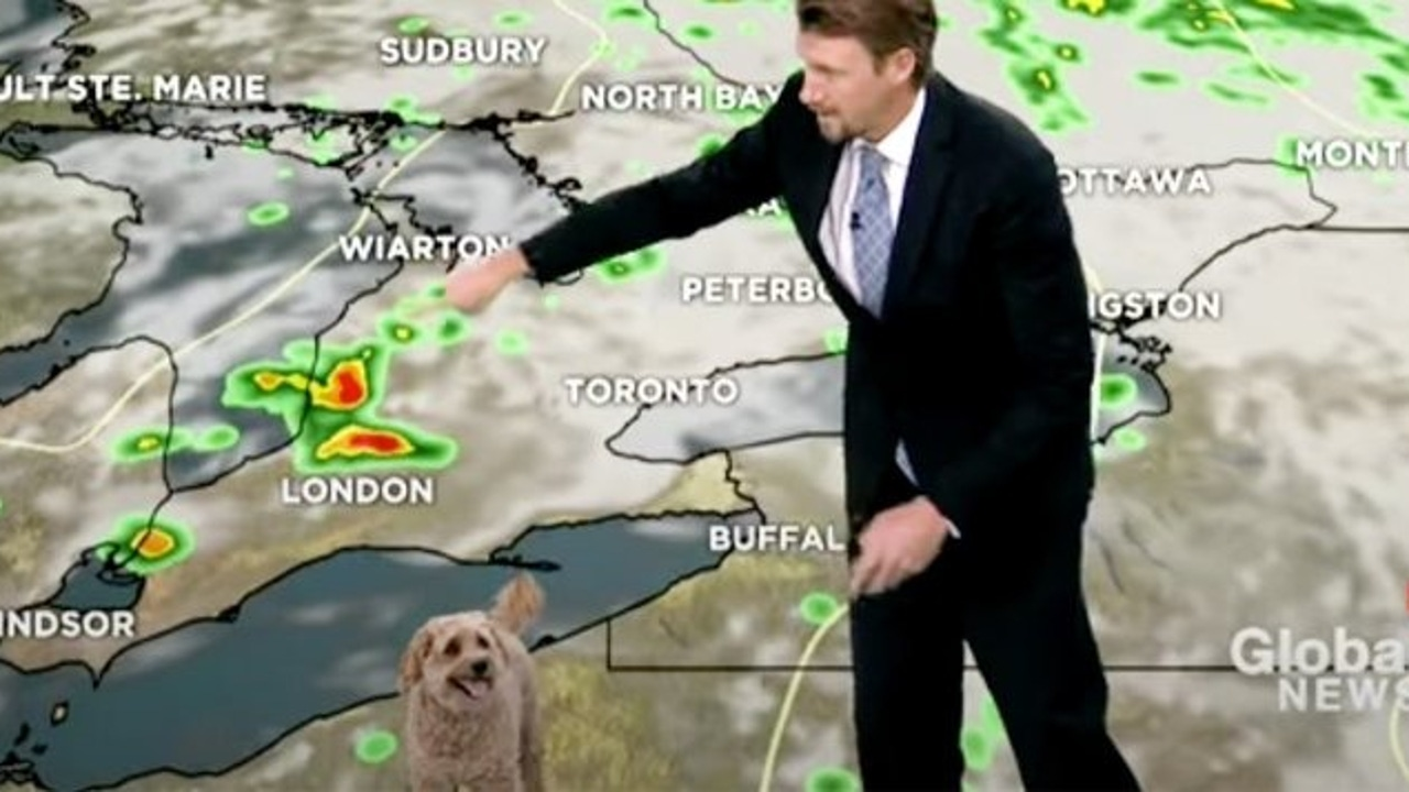 A dog sneaks into the weather radio of a Canadian chain