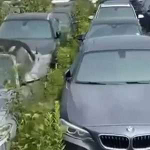 Canada: More than 3,000 all-new BMWs have been abandoned and rot in the open air in Vancouver |  Video |  EC Stories |  Globalism