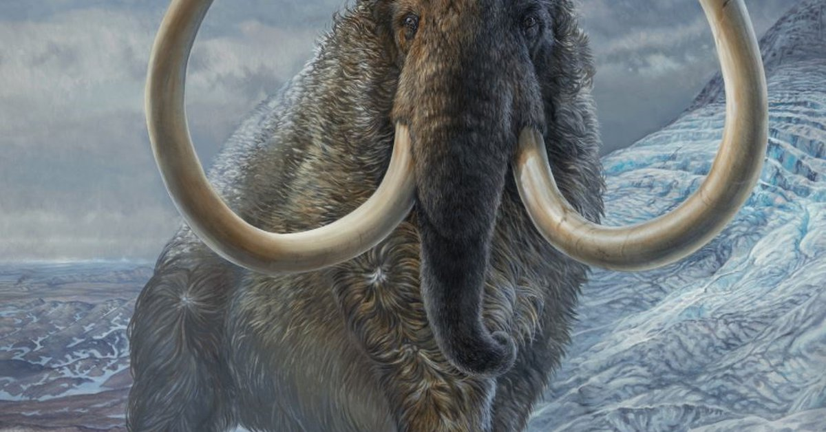 Woolly Mammoth: Scientists seek to revive it in the laboratory and return it to the North Pole