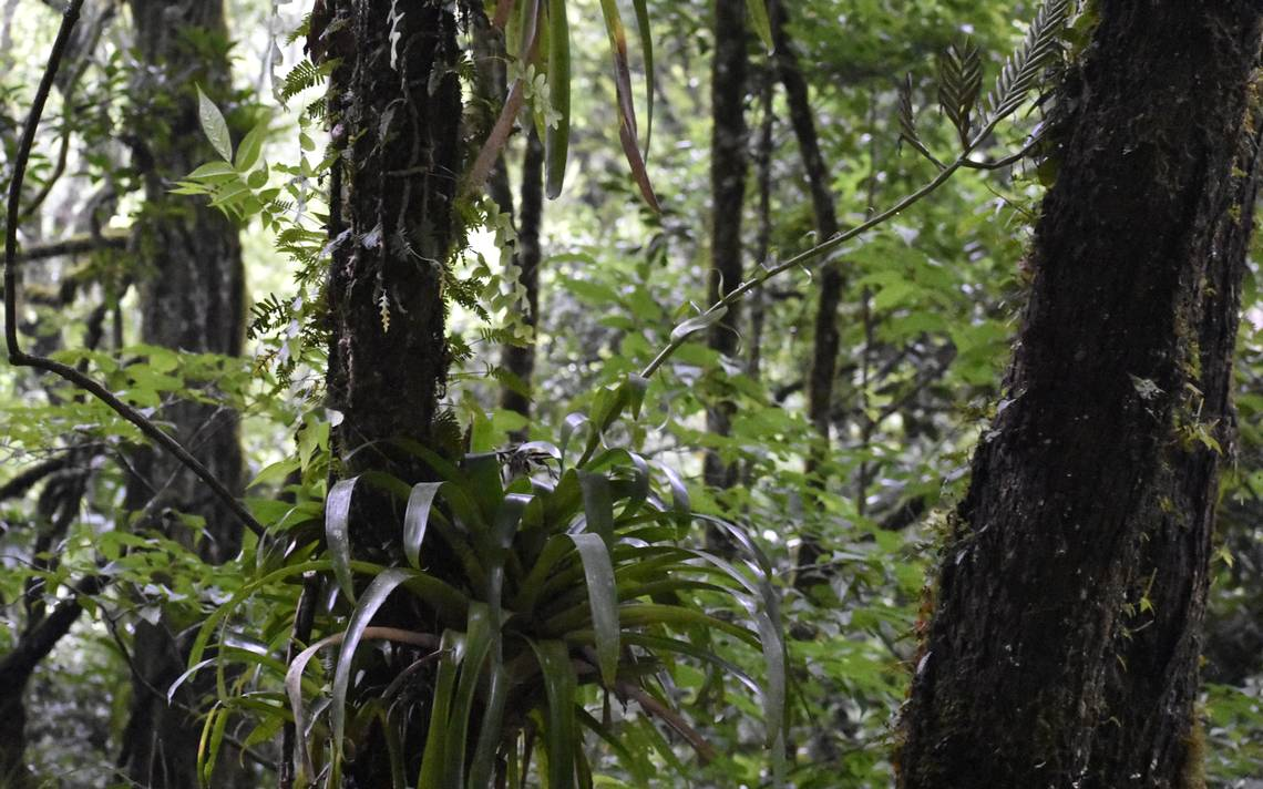 Science: Learn about the first inhabitants of Xalapa and how we harmed them, reports UV researcher Cesar Carvajal Hernandez – Diario de Xalapa