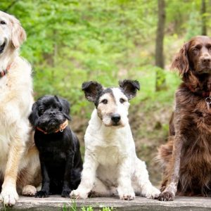The most wanted dog breeds in Spain and the reasons